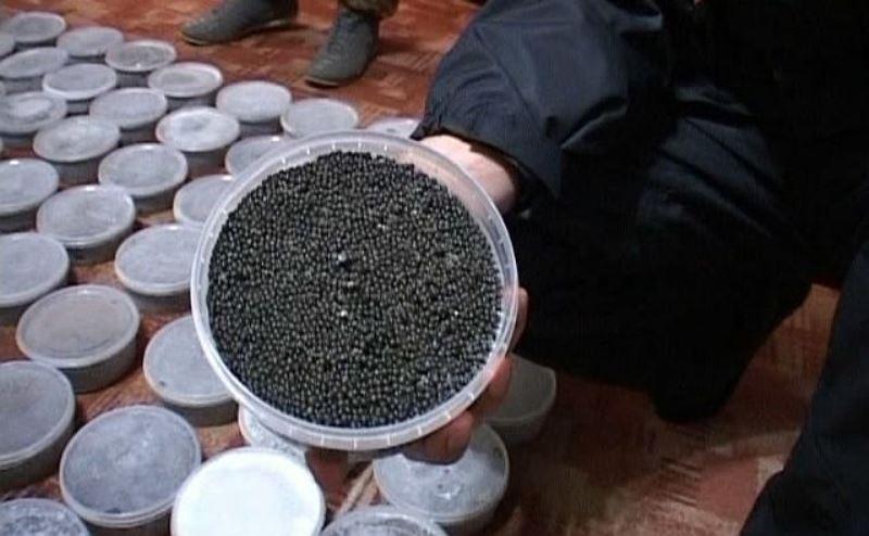 7 тонн черной и красной икры нашли у жителя Аксая