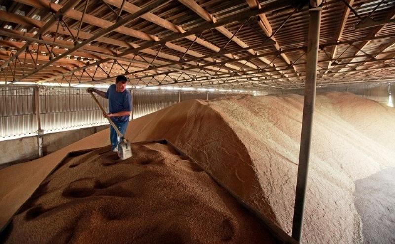Донские аграрии не хотят продавать дешевое зерно