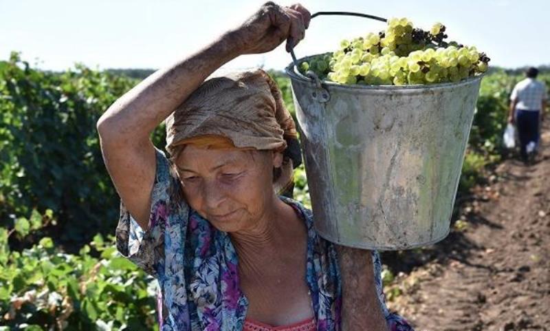 Ростовские виноделы собираются конкурировать с иностранцами