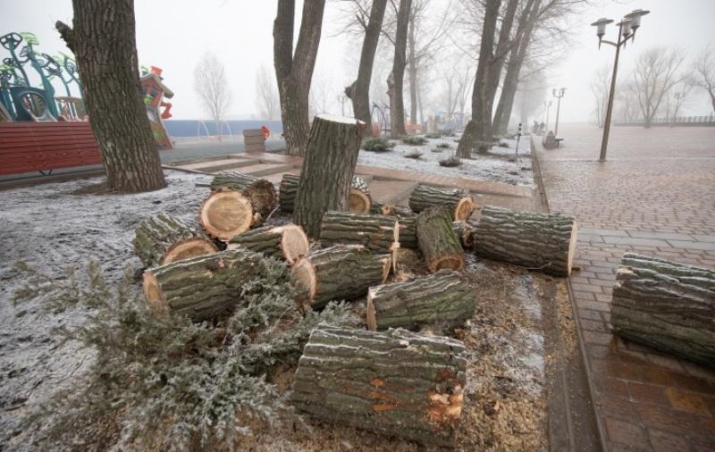 В Ростове массово вырубают деревья