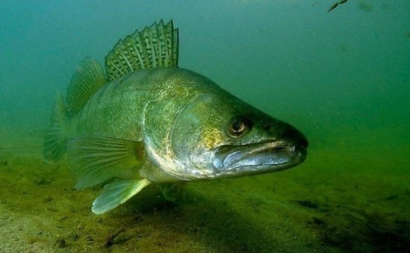 Рыбные запасы Ростовской области снизились до рекордного минимума