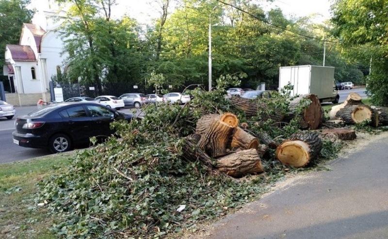 В Ростове уничтожили деревьев на 104 млн. рублей