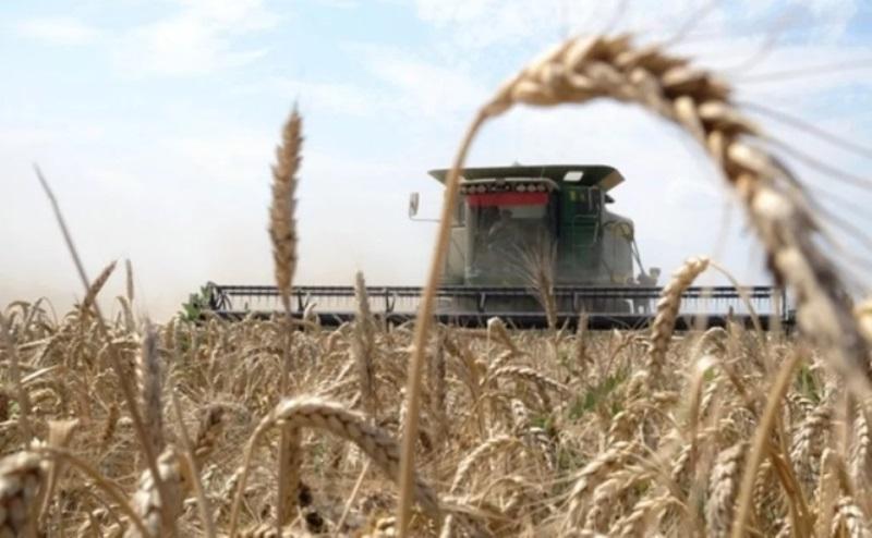 Льготные кредиты на 4 млрд. рублей получили аграрии Дона
