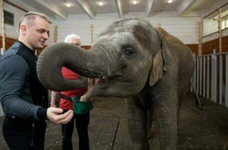 Ростовский зоопарк исключили из Евроазиатской ассоциации