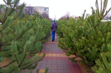 30 елочных базаров откроется в Ростове, а вот фейерверка на Новый год не будет