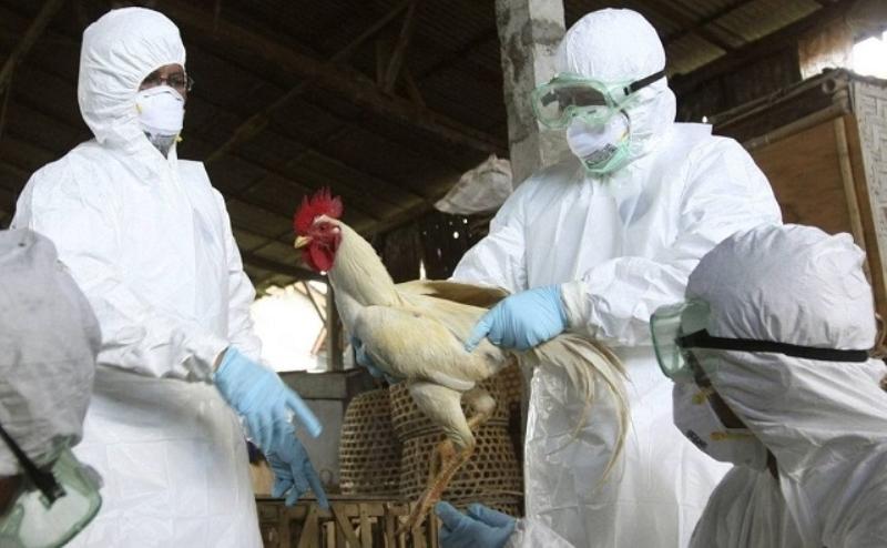 Власти Беларуси запретили поставлять птицу из Ростовской области