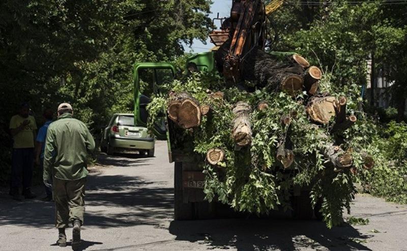 компенсационное озеленение