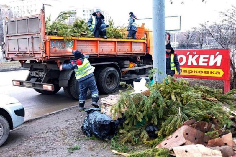 Нераспроданные елки