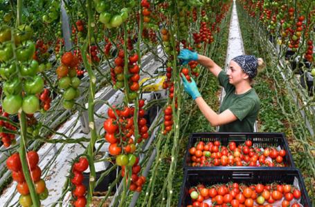 В России хотят ввести новый стандарт экопродукции агропромышленного комплекса