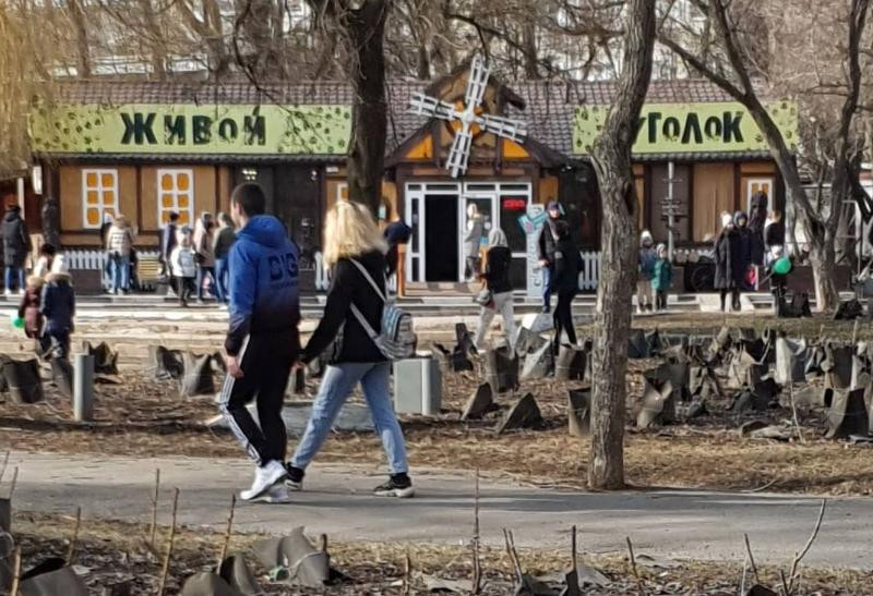 В Трогательном зоопарке Ростова украдена кошка