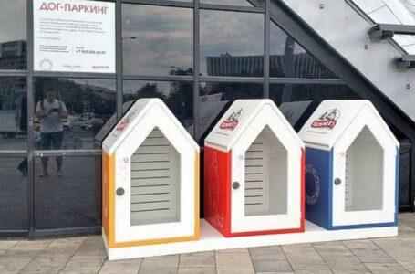 Парковку для собак хотят построить в Ростове