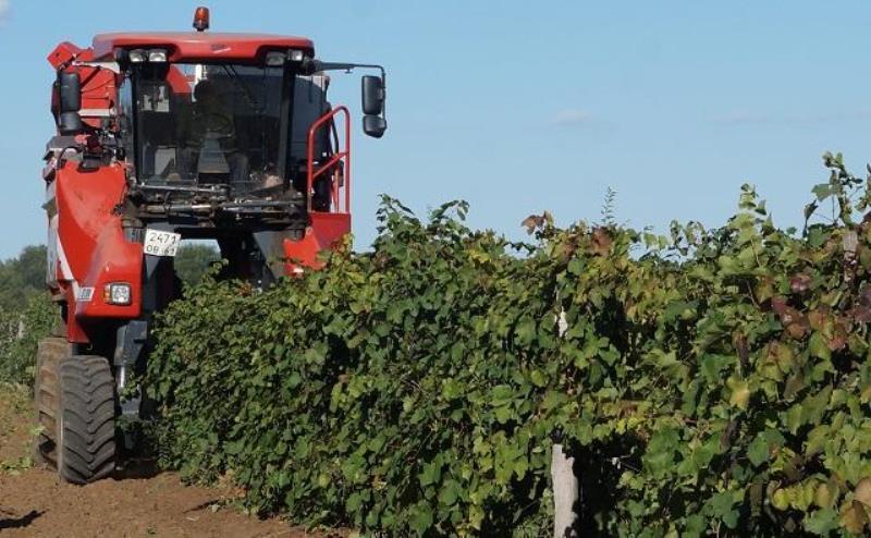 виноградный закон