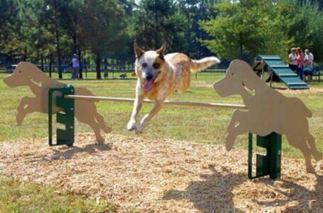 12 площадок для выгула собак создадут в Ростове