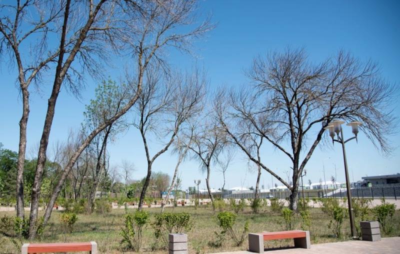 Зеленые насаждения в Ростове вместо застройщиков будет высаживать город