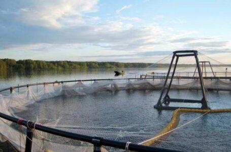Прудовое рыбоводство в Ростовской области может исчезнуть
