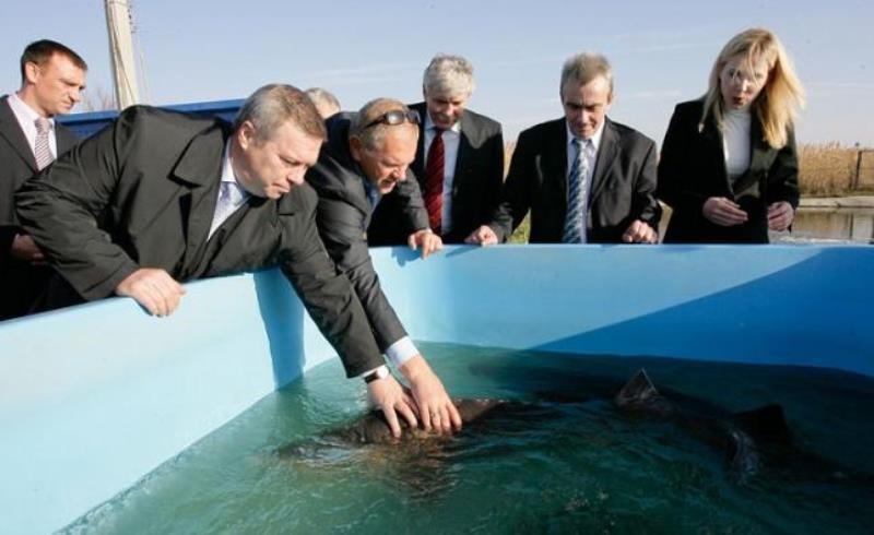 «Новочеркасский рыбокомбинат» выставлен на аукцион